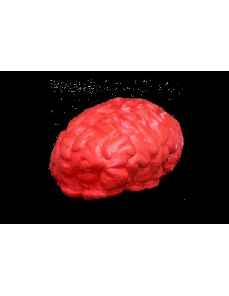 Faux cerveau humain